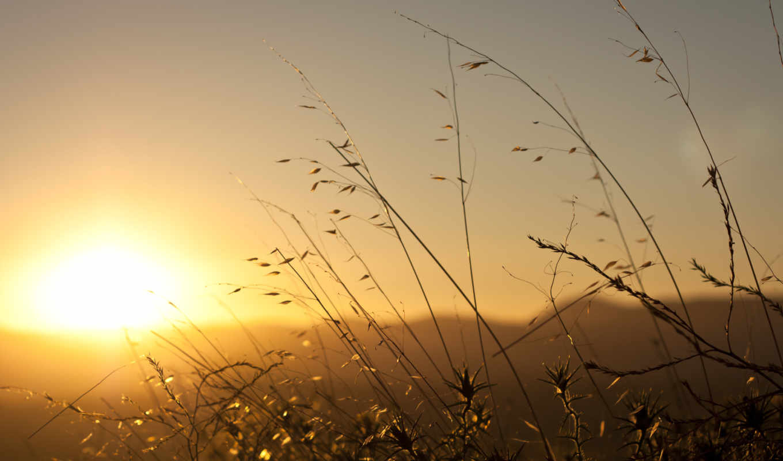 рассвет, трава, sun, утро, во, широкоформатные, сончево, природа, web,