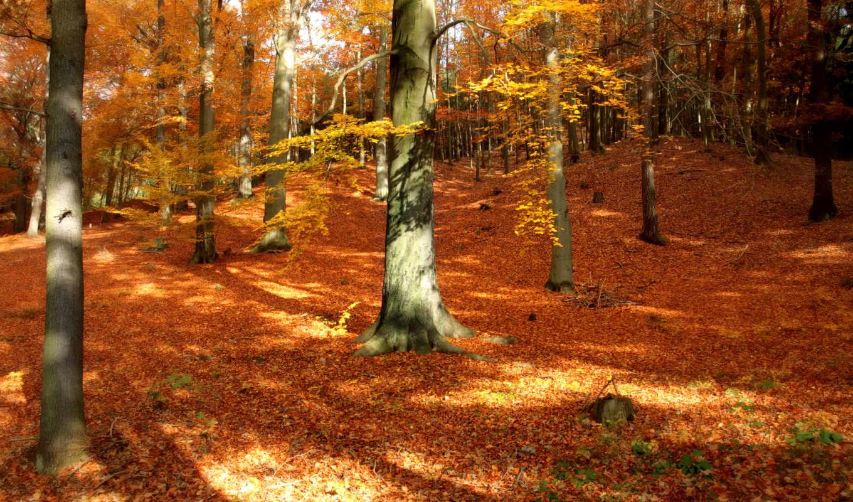 осенние, осень, природа, лес, park, деревя, листья,
