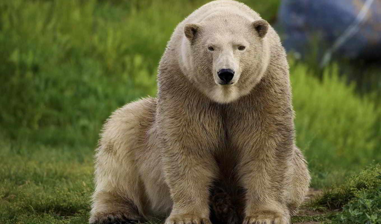 медведь, photos,