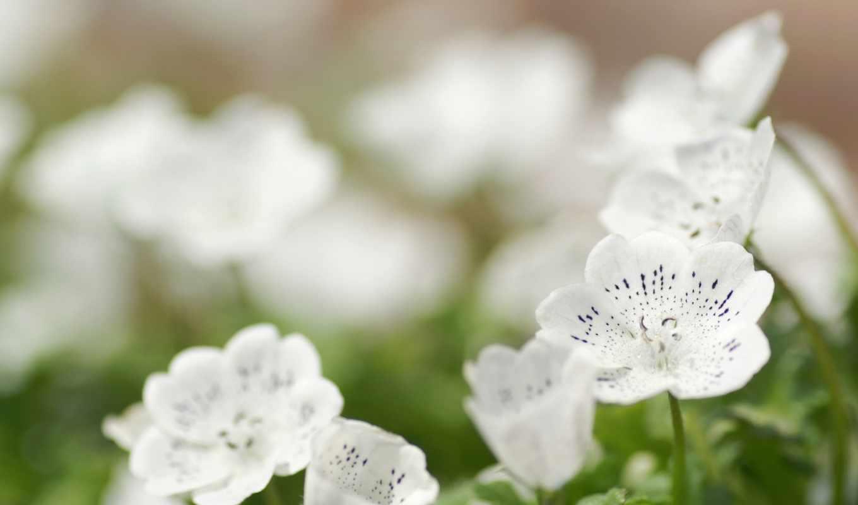 весна, цветы, весенние, часть, марта, белые,