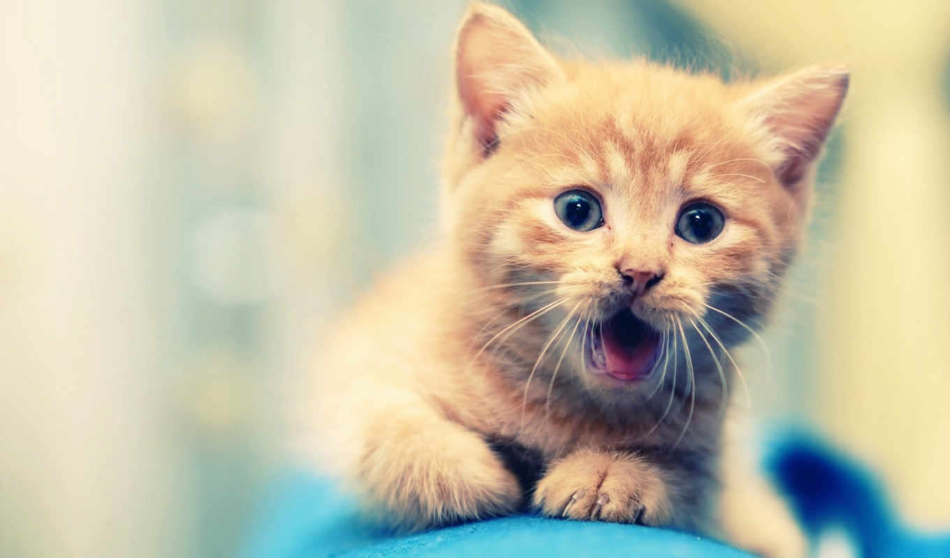 cute, animals, animal, see, об, more, helps, that, инструмент, ideas,
