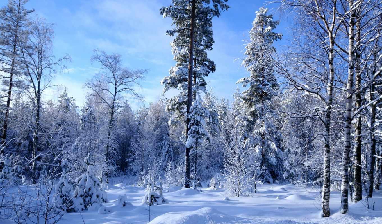les, зимний, zima, winter, много, снега, деревя, здес, главная, priroda, ландшафт,
