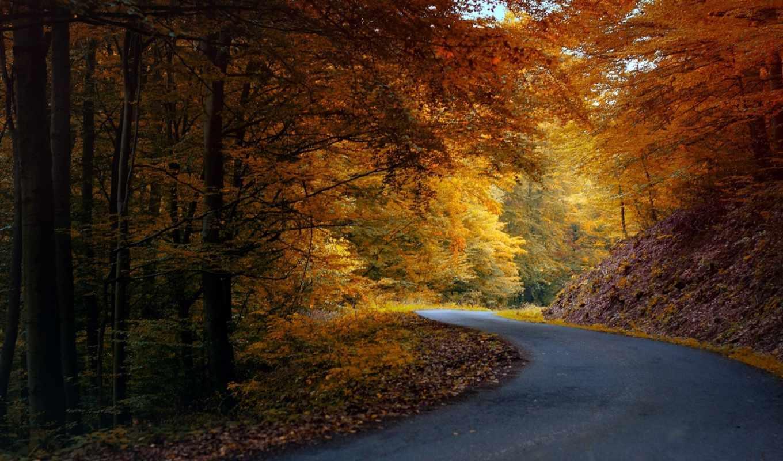 природа, осень, дорога, лес, асфальт, картинка, картинку,