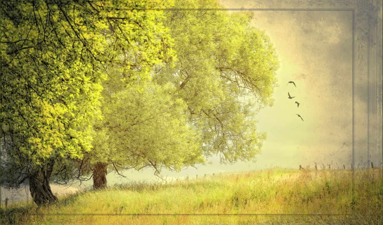 природа, summer, деревья, стиль, лес,