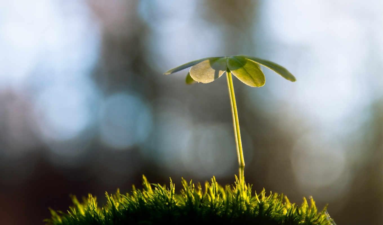 росток, трава, vesna, блики,