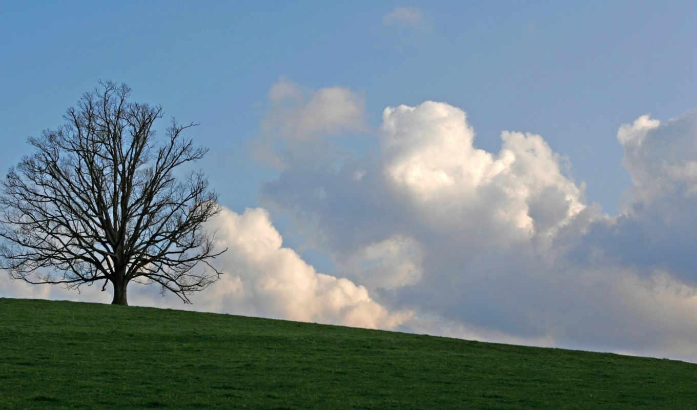 дерево, за, стоящее, может, одиночка, поле, единственное, зацепится, когда, холме,