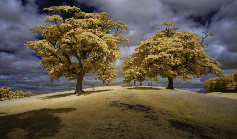 саймон, деревья, холмы, браун, howard,