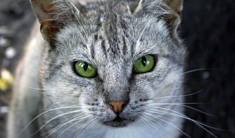 свет, кошки, кот, зеленые, кошек, глазами, глаз, лежит, котов, красивые, ус,