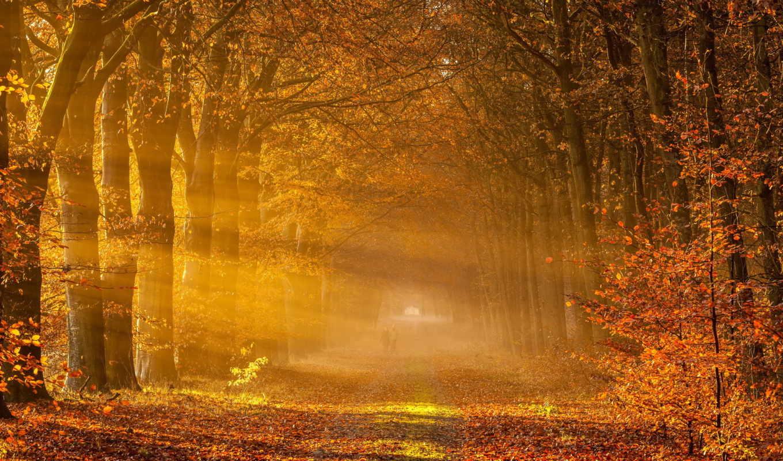 осень, пейзаж, дорога, деревья, лес,