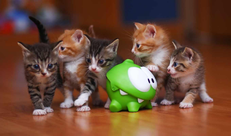 zhivotnye, коты, кот, 4k, котята,
