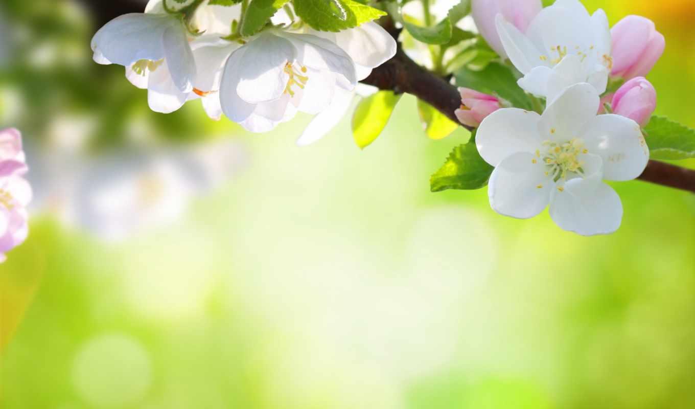 цветы, природа, дерева, яркие,