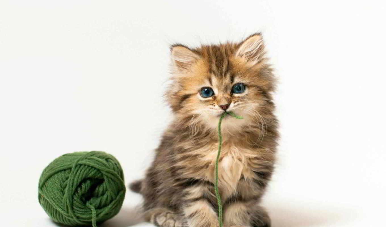 котенок, пушистый, кот, мяч, нитки, fone,