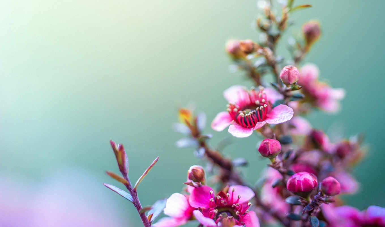 цветы, flowers, подробнее, увеличить, purple,