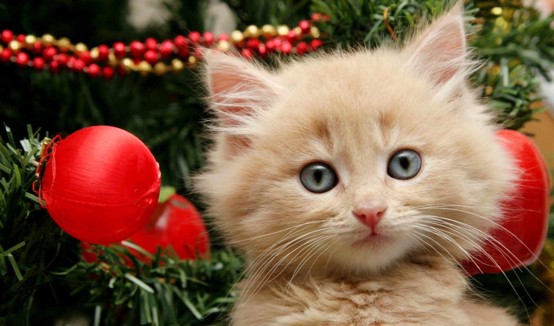 кот, новый год, котенок, котята, котов, изображения, newyearjpg, шапке, января, new,