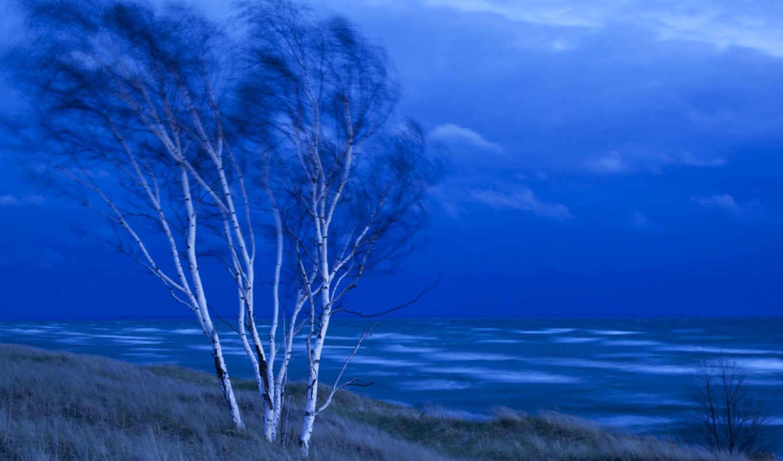 birch, tree, background, desktop, download, size, ready, published,