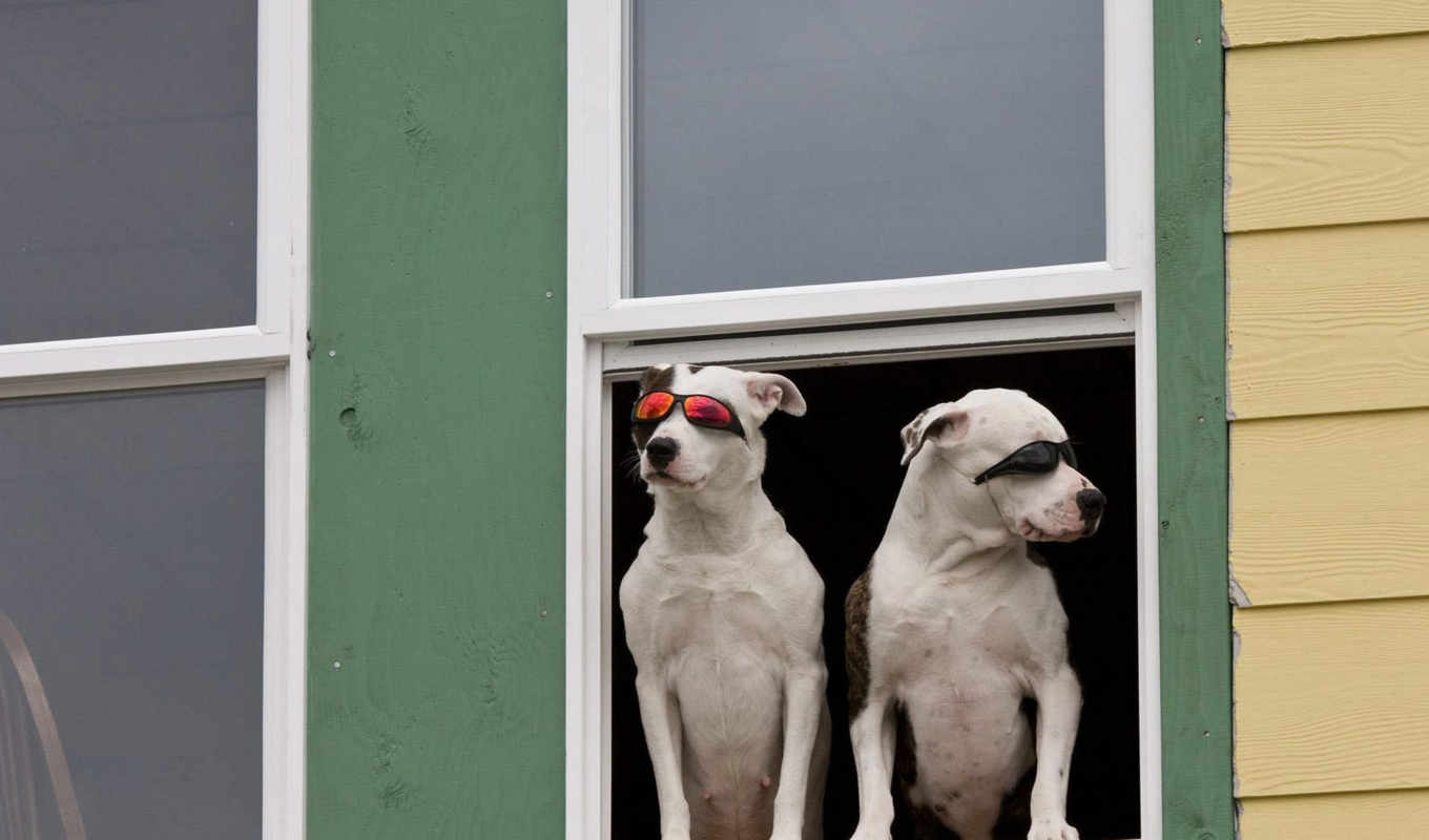 cool, really, more, блог, article, животные, dogs, forward, looking, ft, great, птички,