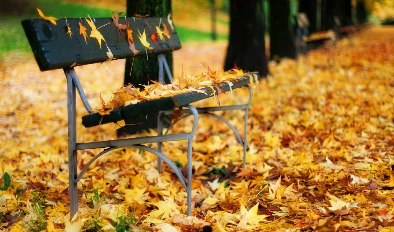 осень, листья, флот, скамейка, природа, графика,