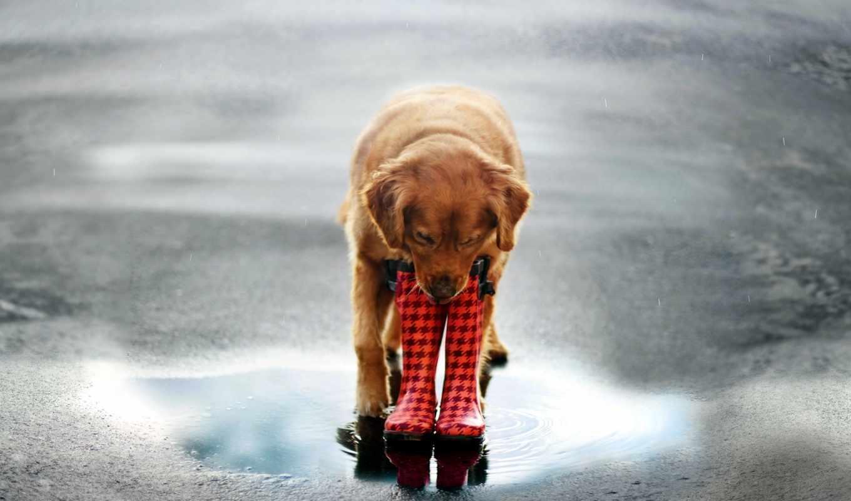 собака, собаки, улица, zhivotnye, лужа, ботинки,