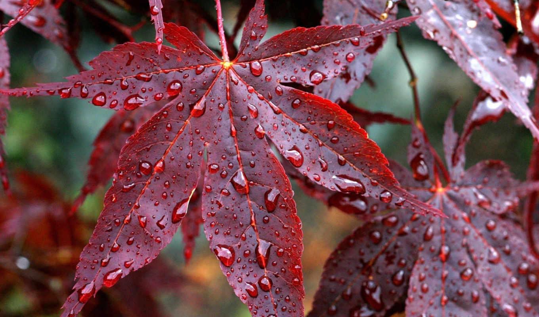 осень, природа,