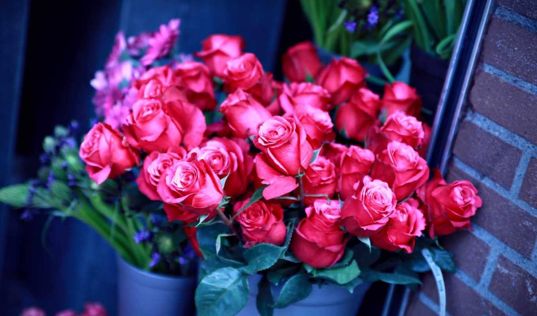 цветы, розы, стена, июня, ведра, dinara,
