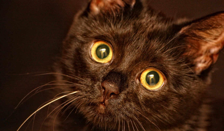 black, котенок, разных, прости,