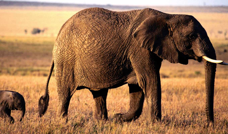 zhivotnye, слоны, красивых, девушек, подборка, качественные, зависайте, slon, февр,