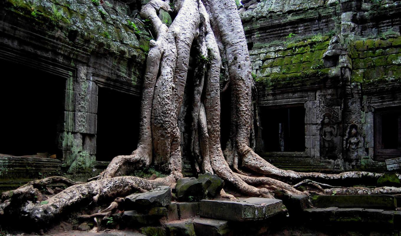 temple, корни, руины, background, cambodia, angkor, desktop, free, древний, download, дерево, строение, buddha, prohm, nature, wat, widescreen,