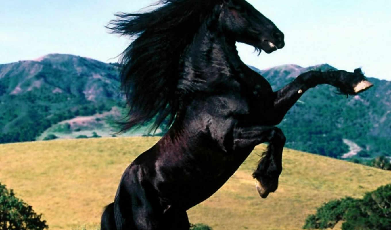 full, diablo, negro, bir, horses, ai, friesian, sitemize, olmadan, linkeri, caballo,