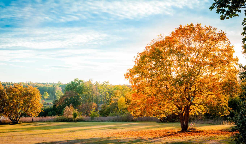 осень, желтые, листья, дерево, небо,
