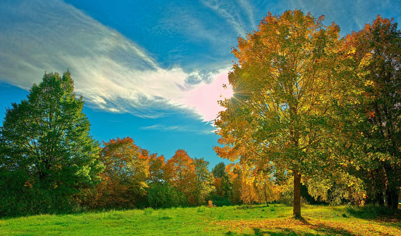 деревья, трава, лужайка, зелёная, лес, небо, природа, листья, картинка,