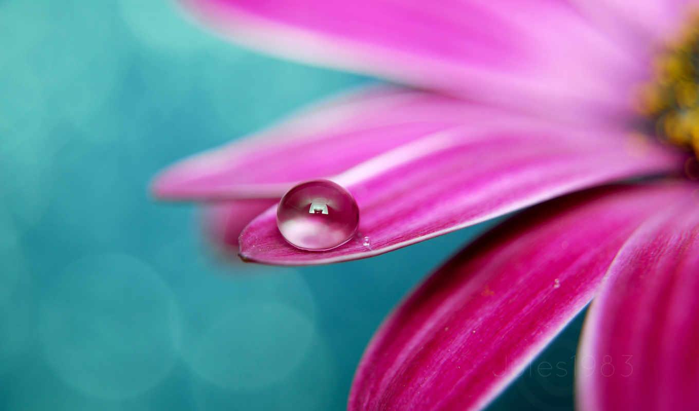 water, цветы, drops, drop, flowers, desktop, petals, free,