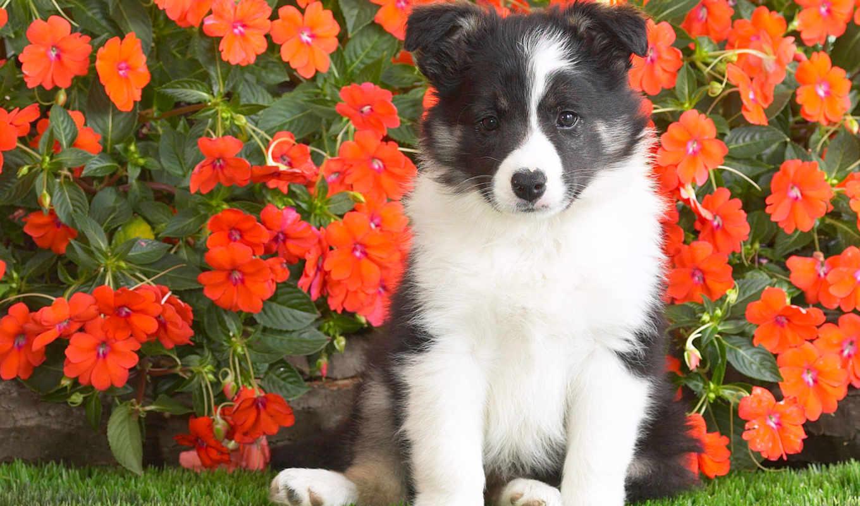цветы, собака, щенок, spotted, красивые, трава, собаки,