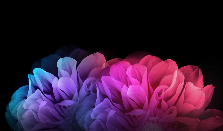 цветы, радуга, текстуры, треугольники, лепестки, красочные, фоны, картинка,