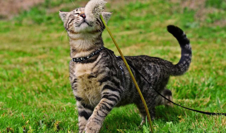 кот, cats, одуванчик, high, definition, трава, wide, widescreen,