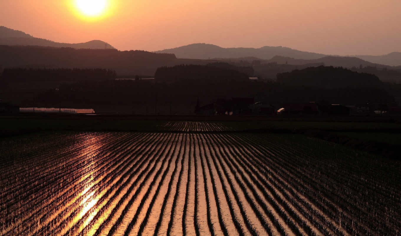 rice, nature, field, солнце, full, небо, hdtv, laba, originally, разрешении, post, jakarta, fields, sunrise,