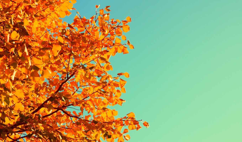 желтые, листья, дерево, небо,