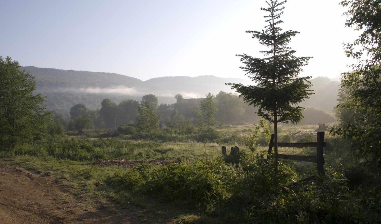 природа, туман, утро, деревья, горы, пейзаж, картинка,