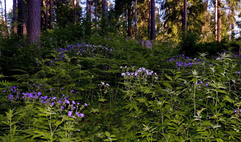 природа, леса, осень,