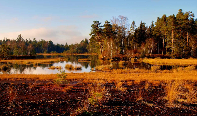 osen, трава, пейзажи -, ozero, пейзаж, сухая, деревя, время,