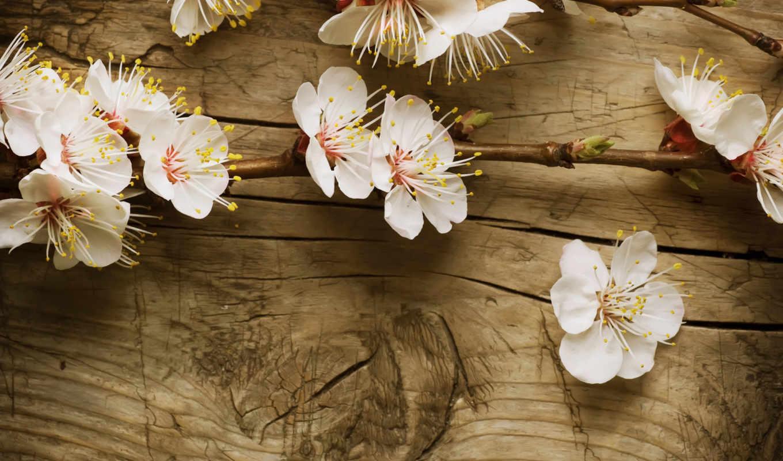 дерево, доска, доски, ветка, яблоня, blossom, cherry, wood, nature, текстуры, высоком, качестве, this, текстура, blossoms,