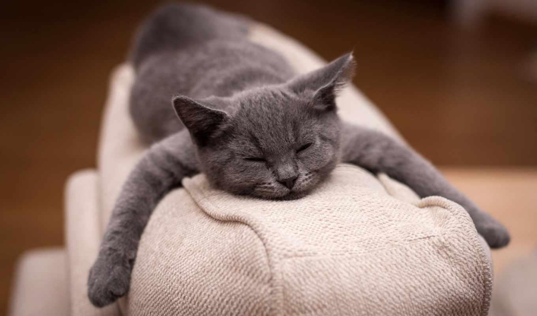 , кот, сон, подушка, котэ,
