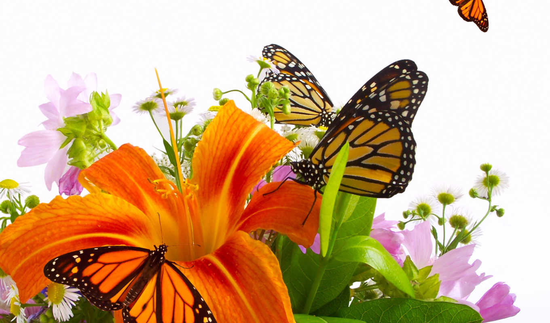 бабочки, цветы, оранжевая, lily, букет,
