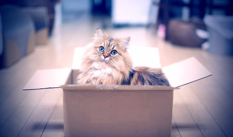 кот, коробке, котенок, box,