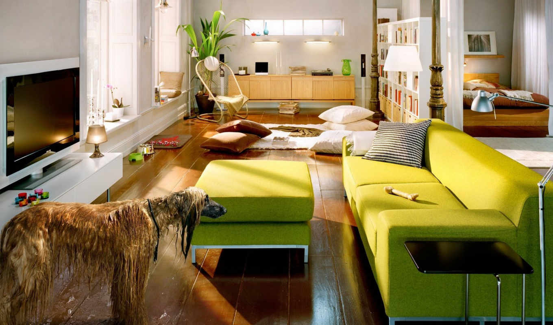 диван, зеленые, собака, уровень, мокрая, зелёный, ответить, комната, нравится, растение,