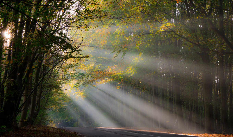 дорога, лес, лучи, солнце
