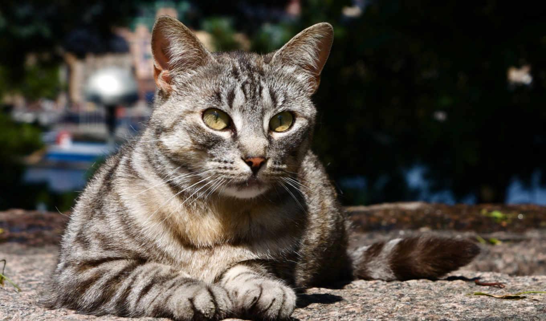 stray, кот, cats, cute, sleepy, лет, кошки, со,