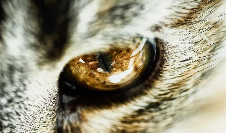 глаз, свет, увеличить, крупным, разных, зрачок, планом, feline,