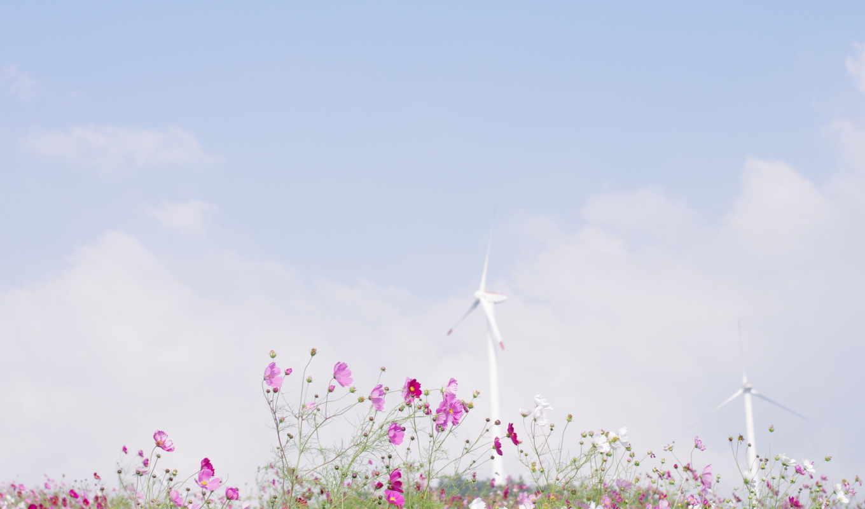 природа, цветы, лепестки, поле, весна, поляна, ветер, растения, небо, облака, космея, голубое,