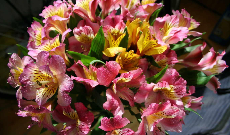 букеты, цветы, кошки, альстромерий,