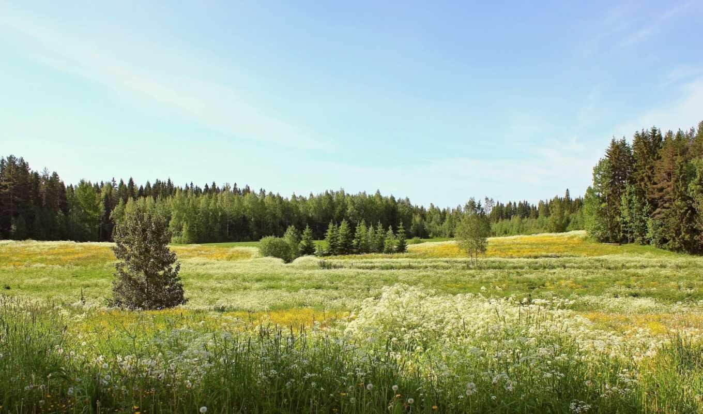 summer, цветы, поле, лес, landscape, одуванчики, деревья,